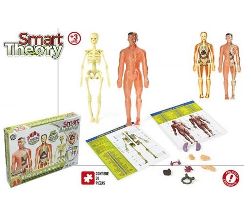 """Jucării pentru Copii - Magazin Online de Jucării ieftine in Chisinau Baby-Boom in Moldova color baby 43552 joc educativ """"figura corpului uman"""""""